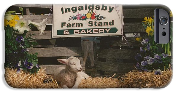 Nature Study iPhone Cases - #245 7a Happy as a Lamb Lamb on Ingaldsby Farm Boxford Massachusetts iPhone Case by Robin Lee Mccarthy Photography