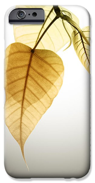 pho or bodhi iPhone Case by ATIKETTA SANGASAENG
