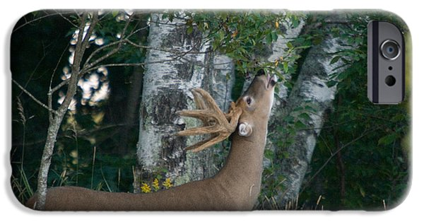 Fed iPhone Cases - White-tailed Buck iPhone Case by Linda Freshwaters Arndt