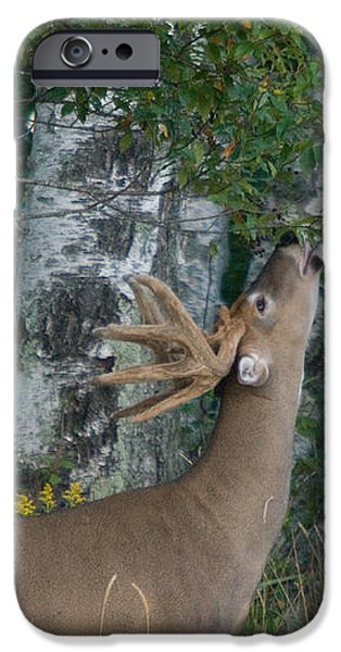 White-tailed Buck iPhone Case by Linda Freshwaters Arndt