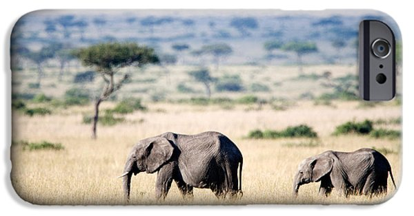 Following iPhone Cases - African Elephants Loxodonta Africana iPhone Case by Panoramic Images