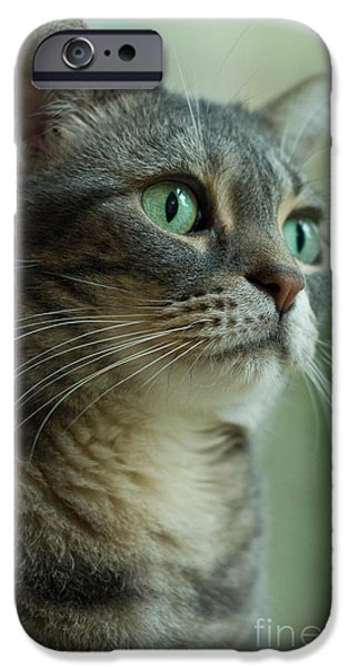 American Shorthair Cat Profile iPhone Case by Amy Cicconi