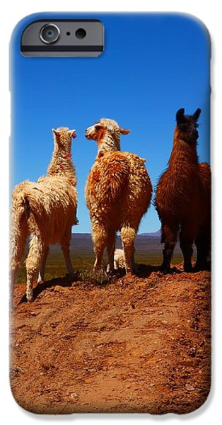Llama iPhone Cases - 3 Amigos iPhone Case by FireFlux Studios