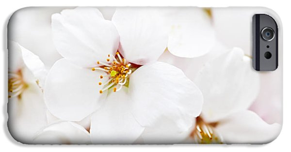 Apple Trees iPhone Cases - Apple blossoms iPhone Case by Elena Elisseeva