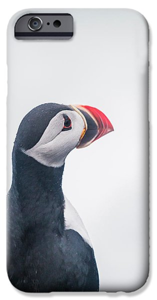 Vertical Flight iPhone Cases - Atlantic Puffin Fratercula Arctica iPhone Case by Panoramic Images