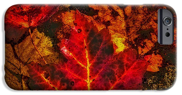 Surreal Landscape iPhone Cases - Autumn Leaves iPhone Case by David Patterson