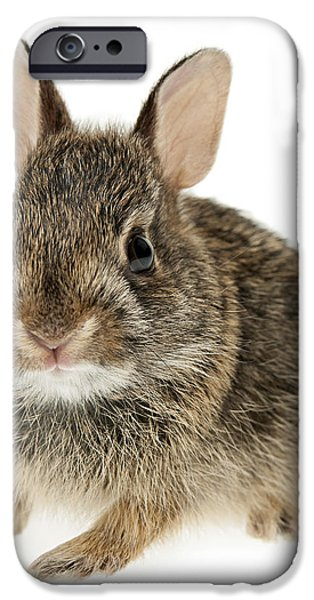 Baby cottontail bunny rabbit iPhone Case by Elena Elisseeva