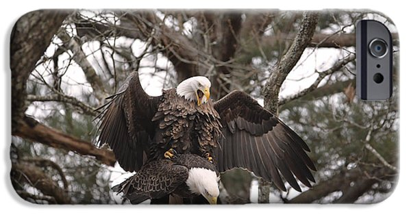 United States iPhone Cases - Bald Eagles Mating in Shiloh Tennessee iPhone Case by Jai Johnson