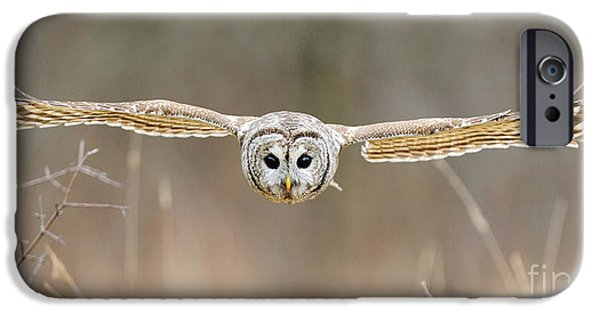 Barred Owl iPhone Cases - Barred Owl In Flight iPhone Case by Scott Linstead