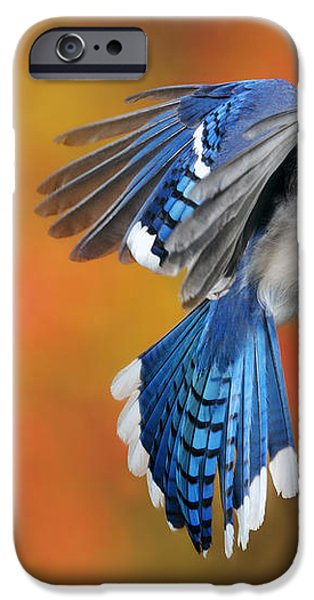Blue Jay iPhone Case by Scott Linstead