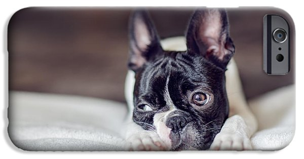 Cute Puppy Photographs iPhone Cases - Boston Terrier Puppy iPhone Case by Nailia Schwarz