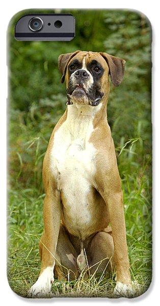 Boxer iPhone Cases - Boxer Dog iPhone Case by Jean-Michel Labat