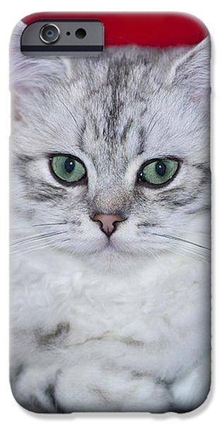 British Longhair Kitten iPhone Case by Melanie Viola
