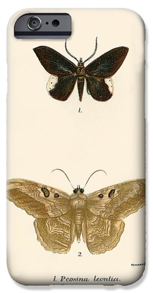 Moth iPhone Cases - Butterflies iPhone Case by English School
