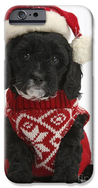 Black Dog iPhone Cases - Cavapoo Puppy In Christmas Hat iPhone Case by Mark Taylor