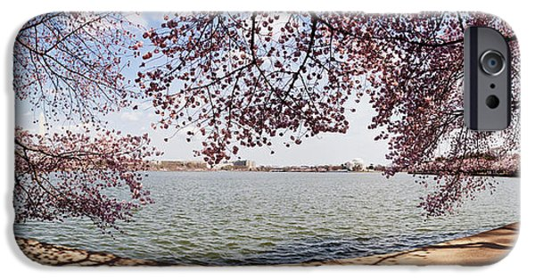 Cherry Blossoms iPhone Cases - Cherry Blossom Trees In The Tidal Basin iPhone Case by Panoramic Images