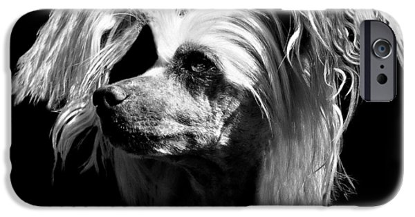 Dog Close-up iPhone Cases - Chinese Crested Hairless iPhone Case by Diana Angstadt