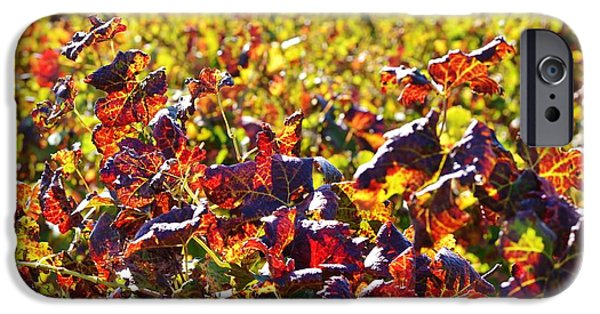 Stellenbosch iPhone Cases - Colors of Autum.... iPhone Case by Werner Lehmann