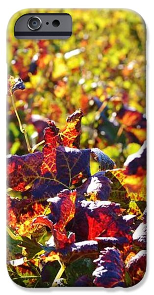 Colors of Autum.... iPhone Case by Werner Lehmann