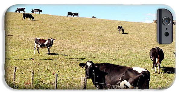 Agricultural iPhone Cases - Dairy cows iPhone Case by Les Cunliffe