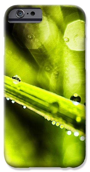 Dew on Grass iPhone Case by Thomas R Fletcher