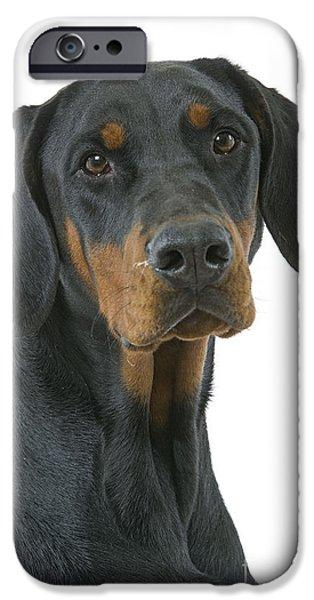 Dog Close-up iPhone Cases - Doberman Pinscher iPhone Case by Jean-Michel Labat
