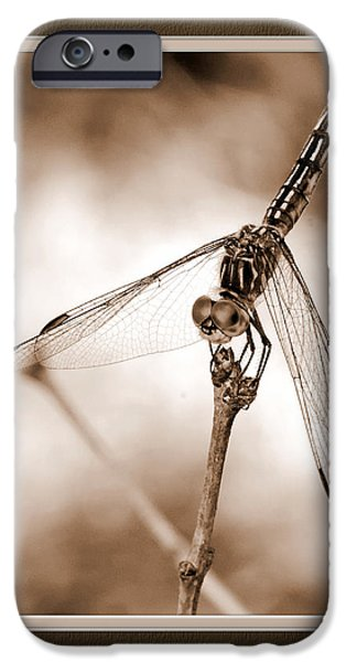 Matting iPhone Cases - Dragonfly Close-Up II iPhone Case by Charles Feagans