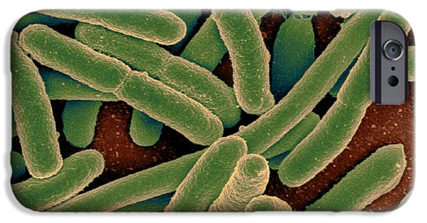Microbiology iPhone Cases - Escherichia Coli Bacteria, Sem iPhone Case by Science Source