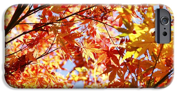 Fall iPhone Cases - Fall forest iPhone Case by Les Cunliffe