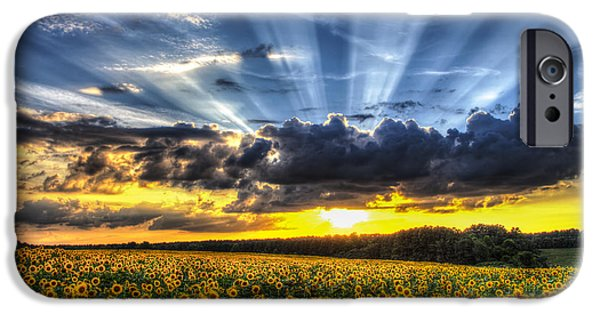 Sunflower Field iPhone Cases - Field of View iPhone Case by Chris Austin