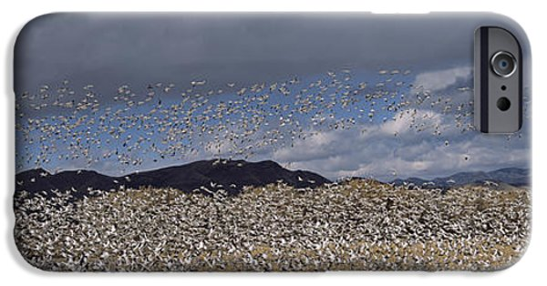 Flocks Of Birds iPhone Cases - Flock Of Snow Geese Flying, Bosque Del iPhone Case by Panoramic Images