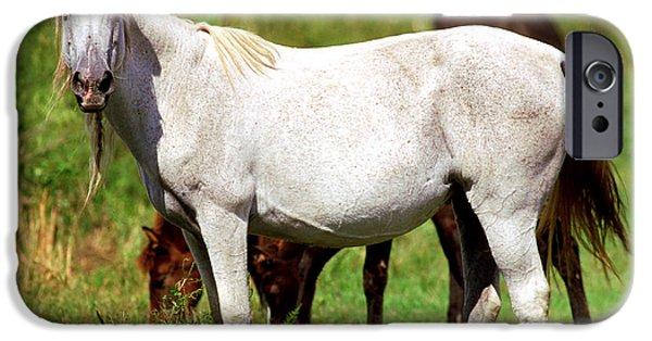 Gut iPhone Cases - Florida Spanish Horse iPhone Case by Millard H Sharp