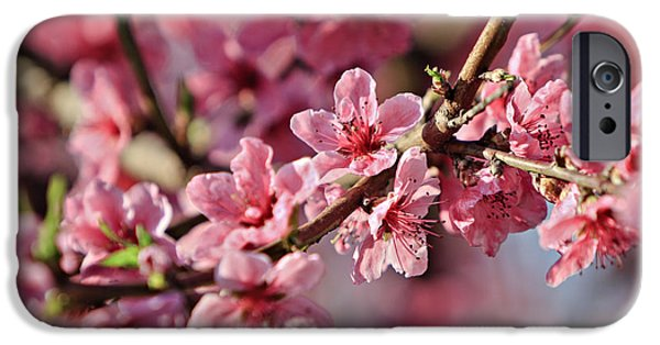 Plant iPhone Cases - Flowering Peach Tree iPhone Case by Dan Radi