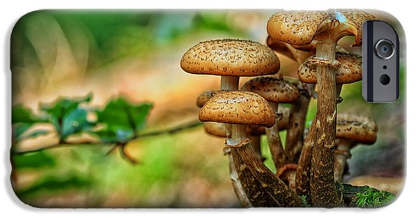 Ground Level iPhone Cases - Forest Mushrooms iPhone Case by Mountain Dreams