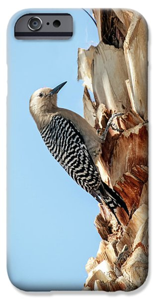 Haybale iPhone Cases - Gila Woodpecker iPhone Case by Robert Bales