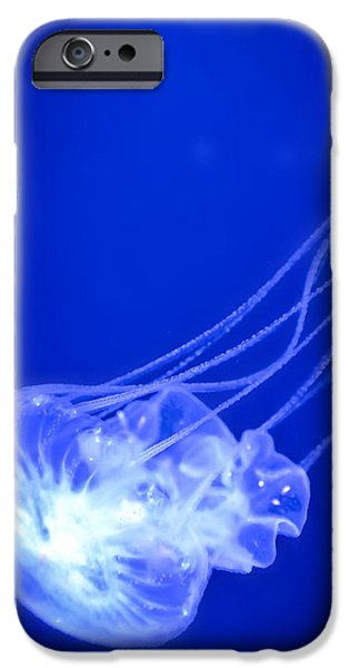 Aquatic Display iPhone Cases - Going down iPhone Case by Nathan Wright