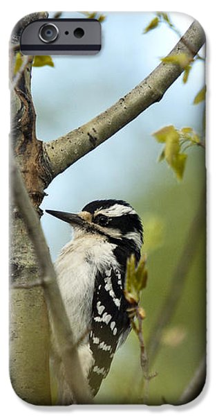 Hairy Woodpecker iPhone Case by Linda Freshwaters Arndt
