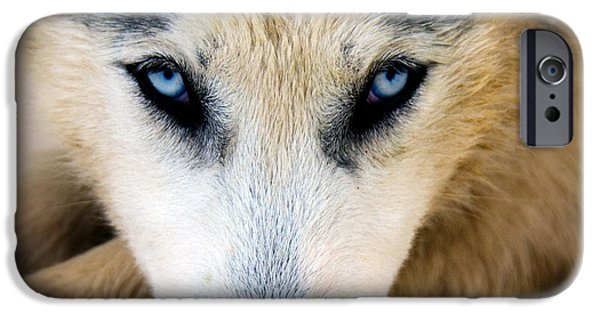 Cute Puppy iPhone Cases - Husky  iPhone Case by Stylianos Kleanthous