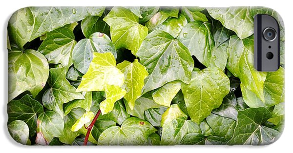 Lush iPhone Cases - Ivy iPhone Case by Les Cunliffe