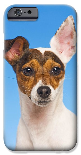 Dog Close-up iPhone Cases - Jack Russell Terrier iPhone Case by Jean-Michel Labat