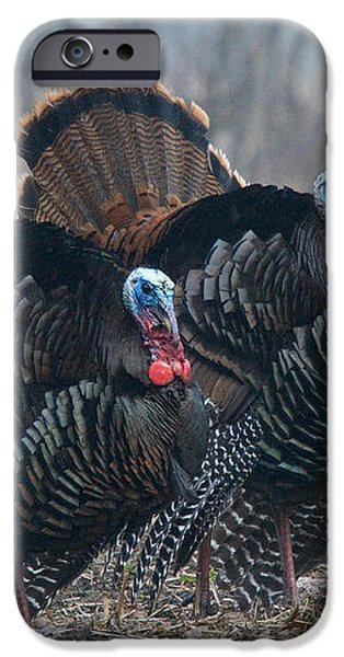 Jake Eastern Wild Turkeys iPhone Case by Linda Freshwaters Arndt