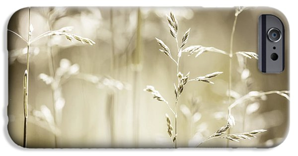 Meadow Photographs iPhone Cases - June grass flowering iPhone Case by Elena Elisseeva