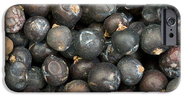 Berry iPhone Cases - Juniper Berries Juniperus Communis iPhone Case by Bob Gibbons