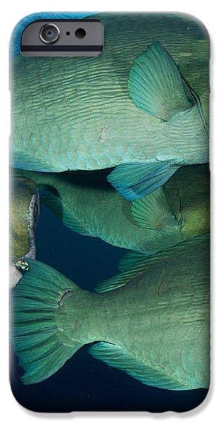 Large School Of Bumphead Parrotfish iPhone Case by Steve Jones