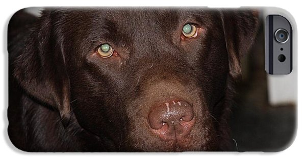 Chocolate Lab iPhone Cases - Little Brody iPhone Case by Betty Baker