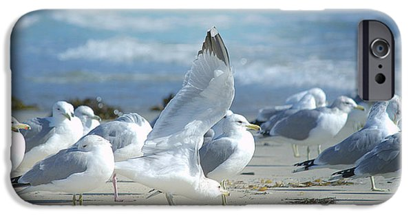 Seagull iPhone Cases - Lofty Ambitions iPhone Case by Fraida Gutovich