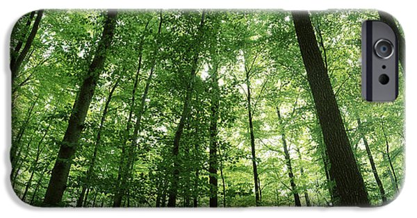 Tall Trees iPhone Cases - Low Angle View Of Beech Trees iPhone Case by Panoramic Images