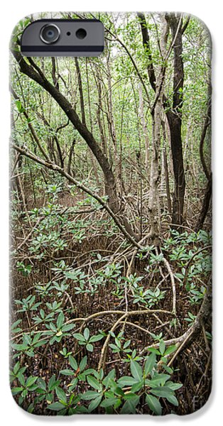 Mangrove Forest iPhone Cases - Mangrove Roots iPhone Case by Tracy Knauer