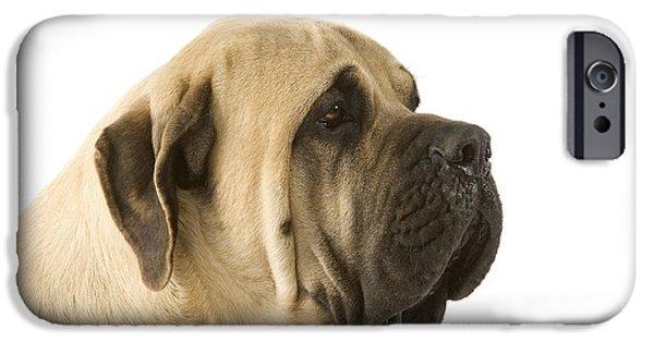 Dog Close-up iPhone Cases - Mastiff iPhone Case by Jean-Michel Labat