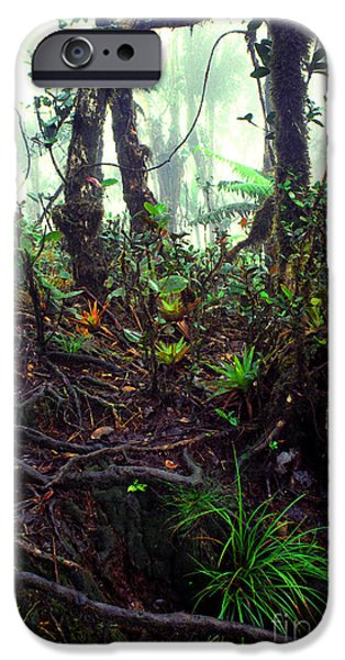 Misty Rainforest El Yunque iPhone Case by Thomas R Fletcher